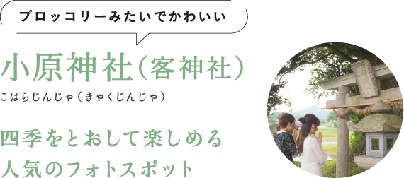 ブロッコリーみたいでかわいい 小原神社(客神社)(こはらじんじゃ(きゃくじんじゃ)) 四季をとおして楽しめる人気のフォトスポット